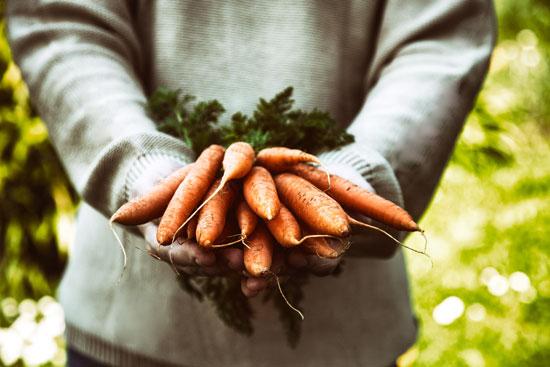 ulei de morcovi
